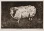 Lamb Study